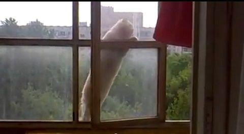 猫 6階の窓を伝って02