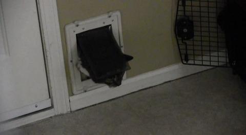 猫 猫用ドアから苦しい02