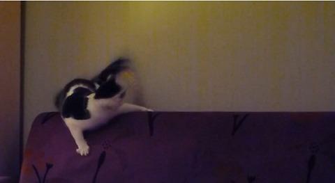 猫 ソファの上でしっぽを04