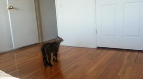 猫 直立歩き01