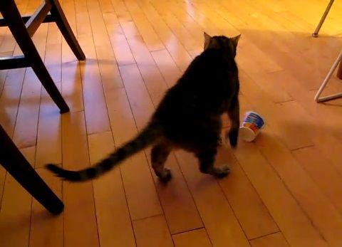 猫 ヨーグルトの空容器が顔に06