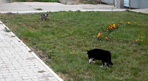 犬猫 ゆっくり近付き、喧嘩!でも犬が00