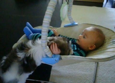 子犬 赤ちゃんベッドに登ってペロペロ02