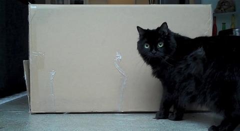 猫 箱を出たり入ったりな2匹00