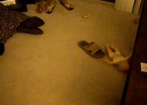 犬 荒らされた部屋01