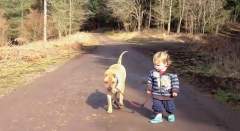 犬 子供と散歩で水溜り08