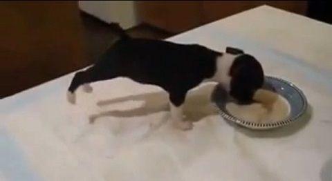 子犬 ミルクを飲んで前足立ち02