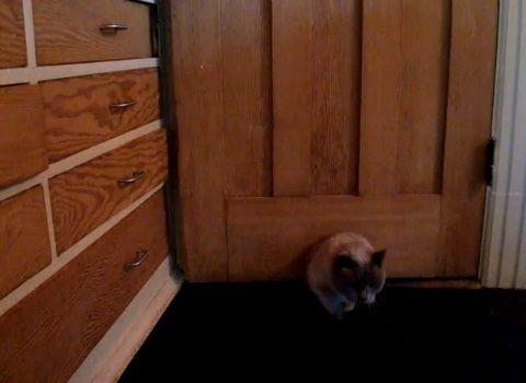 猫 ドアを開ける変わった方法01
