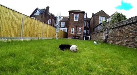 子犬 ボールにアタック・・・05