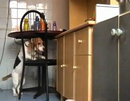 犬 椅子を使ったつまみ食い00