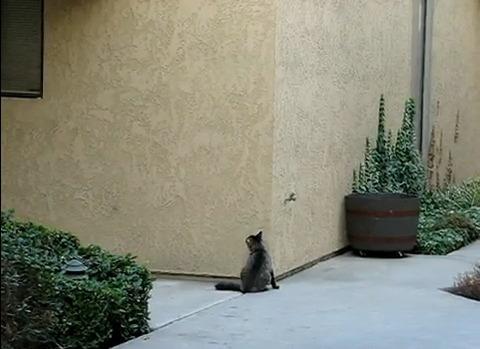 猫 壁をよじ登る03