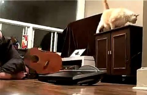 猫 腹筋中にテレビが06