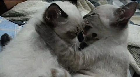 猫 仲良しな2匹02