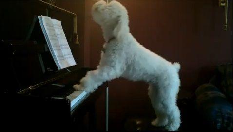 犬 piano 弾語り05