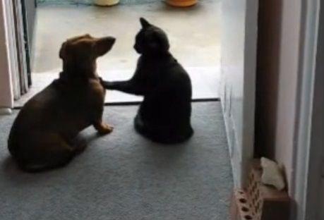 犬猫 ちょっとストップ03