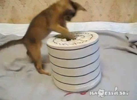 子猫 猫要塞の攻防03