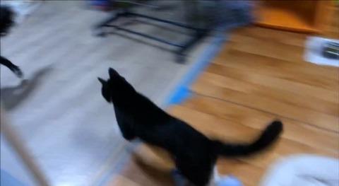 犬猫 誘い上手なボーダーコリー06