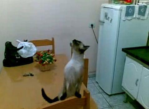 猫 天井の虫が気になる?03