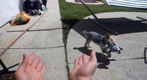 犬 googleglassで飼い主が撮影03