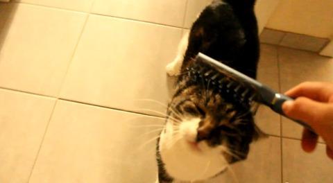 猫 ブラッシング07