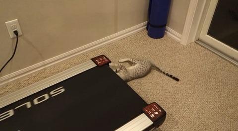 猫 ルームランナーに02