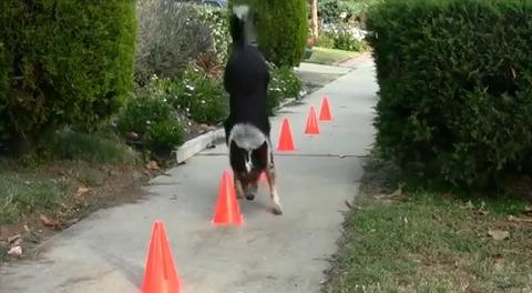 犬 超絶技の連続04