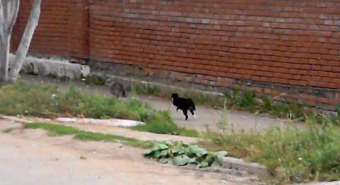犬猫 ゆっくり近付き、喧嘩!でも犬が06