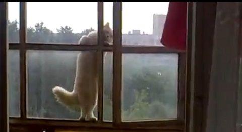 猫 6階の窓を伝って01