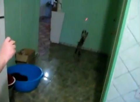 猫 レーザーポインタで壁登り03