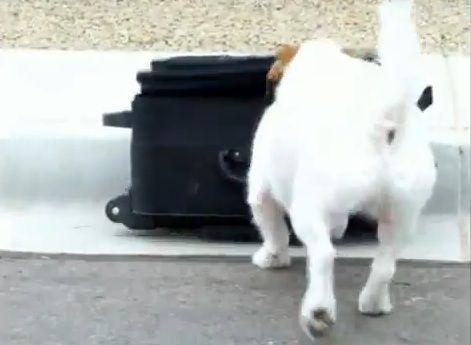 多芸な犬01