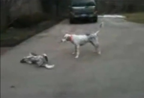 犬 なぜか倒れる07