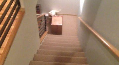 猫 段ボールに入りたい!でもそこは階段!05