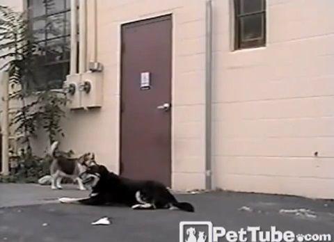 犬 犬のためにドアを開けてあげる犬01