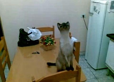 猫 天井の虫が気になる?01