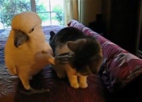 子猫 オウムがナデナデ01