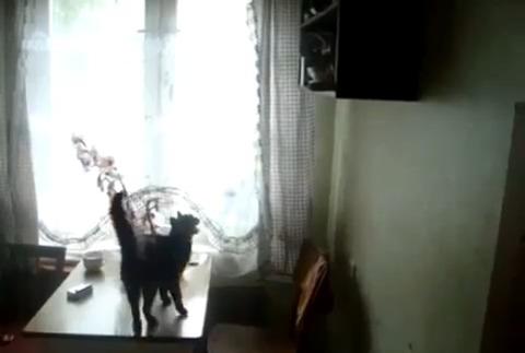 猫 ジャンプ全然届かず01