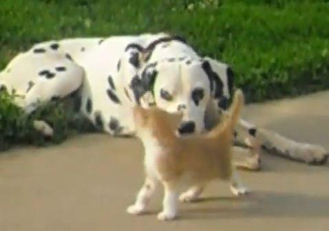 犬猫 その1 05