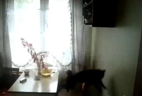 猫 ジャンプ全然届かず04