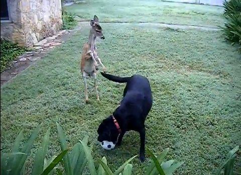 犬 鹿と遊ぶ01