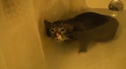 猫 お風呂で悲しげに01