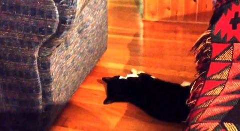 猫 ソファから落下!でも02