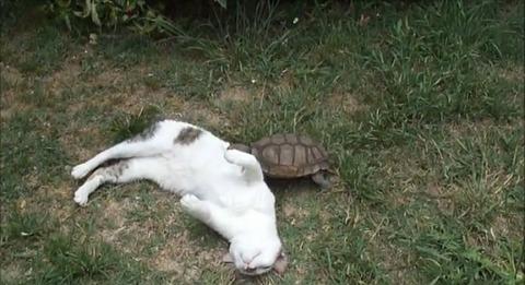 猫 亀にマッサージ05