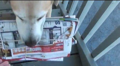 犬 郵便物は箱まで持ってくる02