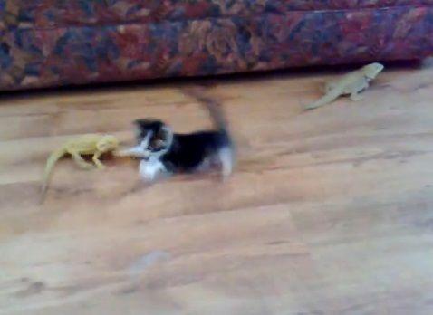 子猫 トカゲ10
