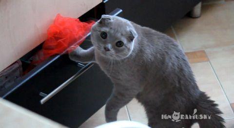 猫 見られてるのに気づいたドロボー猫06