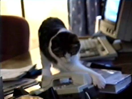 猫 電話に出ない04