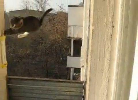 猫 三角飛び03