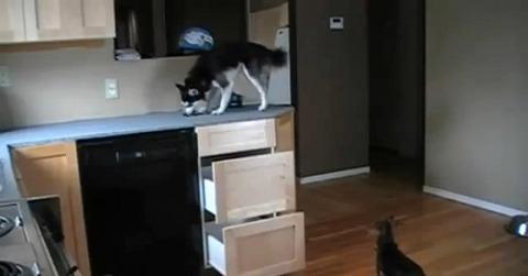 犬 キッチンの引き出しで07