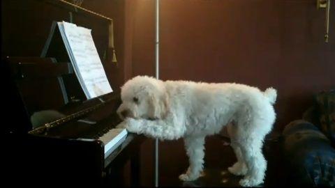犬 piano 弾語り02