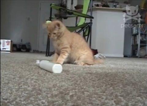 子猫 電動歯ブラシをぺしぺし00